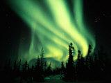 Northern Lights Fotografisk tryk af Norbert Rosing