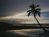 A Silhouetted Palm Tree on a Twilit Beach Photographic Print by Raul Touzon