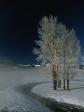Frosty Cottonwood Trees Standing Near a Steamy Creek in Snowy Scene Photographic Print by Tom Murphy