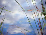 Sedges and Sky Photographic Print by Raymond Gehman