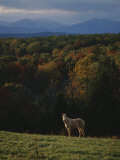 A Horse Stands on a Hill Overlooking Autumn Foliage and Mountains Photographic Print by Sam Kittner