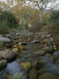 A Small, Wild Creek Flows over the Stones Photographic Print by Rich Reid