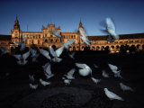 Pigeons in a Square in Seville Photographic Print by Steve Winter