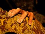 Close up of a Rock Climbers Hand Fotografisk trykk av Bill Hatcher