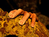 Close up of a Rock Climbers Hand Fotografie-Druck von Bill Hatcher