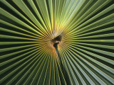A Close View of a Palm Frond Photographic Print by Ed George