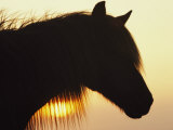 Wild Pony in Silhouette at Twilight Photographic Print by James L. Stanfield
