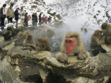 Tourists Watch a Group of Snow Monkeys Soaking in a Hot Spring Photographic Print by Tim Laman