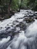A Shallow Woodland Stream Tumbles over its Rocky Bed Photographic Print by Melissa Farlow