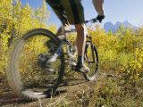Cyclist Rides Mountain Bike Among Trees with Autumn Foliage Fotoprint van Mark Cosslett