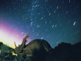 Northern Lights and Meteor Trails over a Replica of a Styracosaurus Impressão fotográfica por Jonathan Blair