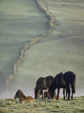 Moor Ponies Photographic Print by Sam Abell