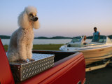 A Poodle Sits on a Metal Toolbox in a Truck Bed Photographic Print by Joel Sartore
