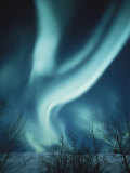 The Aurora Borealis Photographic Print by Paul Nicklen