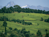 Tea Plantations Covering the Hills Near Mount Kenya Photographic Print by Michael S. Lewis