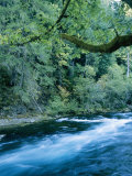 The Mckenzie River Flows Through the Trees Photographic Print by Roy Toft