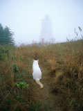 A White Cat Sits Facing the Swallowtail Lighthouse in the Fog Photographic Print by Bill Curtsinger
