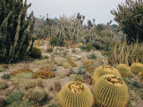 A Portion of the Desert Plant Collection in Huntington Botanic Gardens Photographic Print by Joseph Baylor Roberts