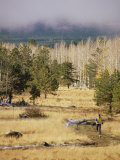 Trail-Running in the San Francisco Peaks Photographic Print by Kate Thompson