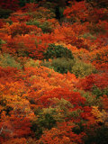 Autumn Foliage Decorates the Park Photographic Print by Raymond Gehman