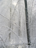 Snow Paints Trees White in the Woods of New York Photographic Print by Vlad Kharitonov