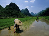 Farmers in Rice Fields of Farming Village, Yangdi Valley Photographic Print by Raymond Gehman