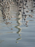 An Abstract Reflection of the Washington Monument on the Rippled Surface of the Tidal Basin Photographic Print by Stephen St. John