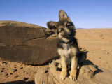 Portrait of a Puppy Next to a Rock Carved with Anasazi Petroglyphs Photographic Print by David Edwards