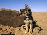 Retrato de un cachorro junto a una roca con petroglifos Anasazi Lámina fotográfica por David Edwards