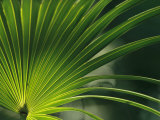 Close View of a Palm Frond Fotografisk tryk af Klaus Nigge