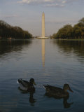 Ducks in the Reflecting Pool with the Washington Monument in Back Photographic Print by Stephen St. John