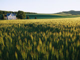 Wheatfields Glowing in the Sun and a Farmhouse in the Distance Photographic Print by Skip Brown