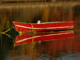 A Gull Rests on an Old Rowboat Photographic Print by Raymond Gehman