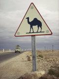 Beware of Camels Sign Along an Algerian Highway Photographic Print by Thomas J. Abercrombie