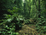 Lush Woodland View in Papua New Guinea Photographic Print by Klaus Nigge