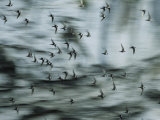 Swifts Fly Out of the Cave Photographic Print by Stephen Alvarez