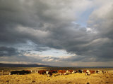 A Cloud-Filled Sky over a Yakima Valley Cattle Ranch Photographic Print by Sisse Brimberg