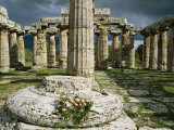 The Doric Columns of the Greek Temple Dedicated to Hera at Paestum Photographic Print by Sisse Brimberg