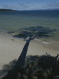 The Shadow of a Tree Juts out over the Water at Hazards Beach Photographic Print by Sam Abell