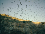 Mexican Free-Tailed Bats Emerge from Their Caves to Hunt Photographic Print by Walter Meayers Edwards