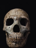 This Neandertal Skull from Wadi Amud is About 60,000 Years Old Photographic Print by Ira Block