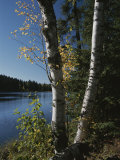 A View of a Lake Through Trees and Plants Photographic Print by Raymond Gehman