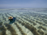 A Zanzibar Island Woman Cultivating Seaweed in the Indian Ocean Photographic Print by Michael S. Lewis