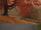A Country Road Turns Downhill, Passing a Wooden Fence and a Tree Photographic Print by Kenneth Garrett