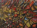 Close View of a Fossil Fotografisk tryk af David Boyer