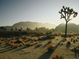 Silhouetted Joshua Trees at Twilight in the Desert Photographic Print by Kate Thompson