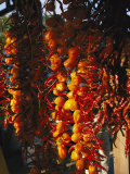 Organically-Grown Peppers are Hung at the Cary Farmers Market Photographic Print by Stephen Alvarez
