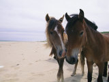 Two Curious Wild Horses on the Beach Photographic Print by Nick Caloyianis