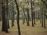 A Woodland View with New Spring Foliage and Blooming Trees Photographic Print by Raymond Gehman