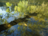 Trees Reflected in the Water Photographic Print by David Boyer